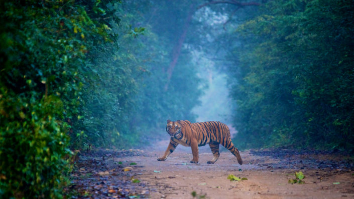 Tiger in Corbett Accessible Trip with Planet Abled